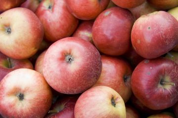 10 Children's Books About Apples - Red Apple Reading